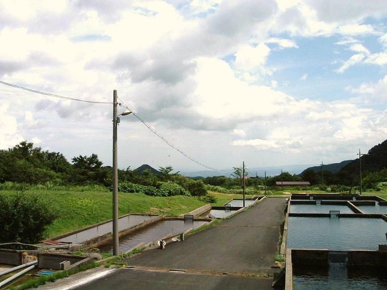 生簀 東大山養魚場